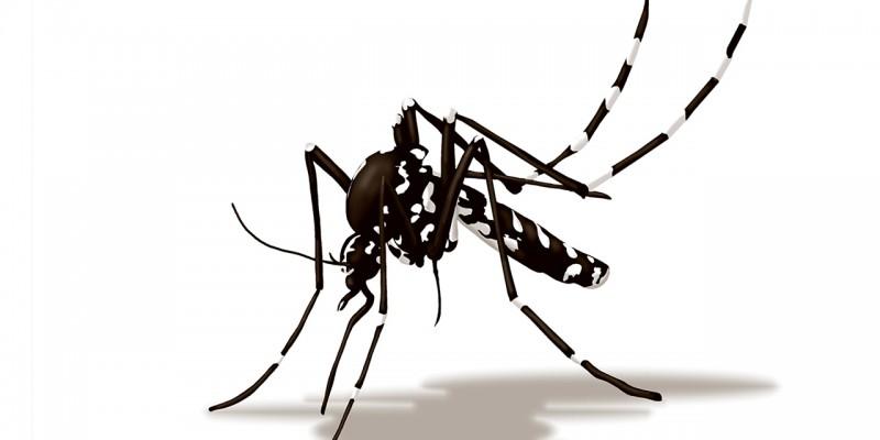 come difendersi dalla zanzara tigre