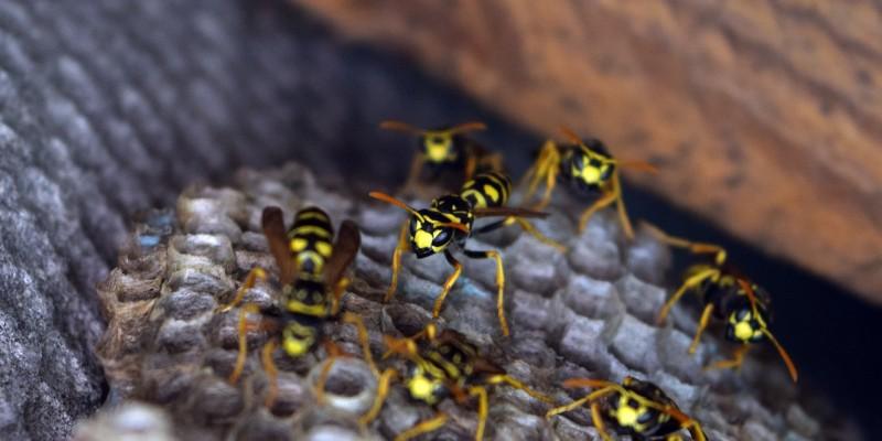 tenere lontani insetti infestanti
