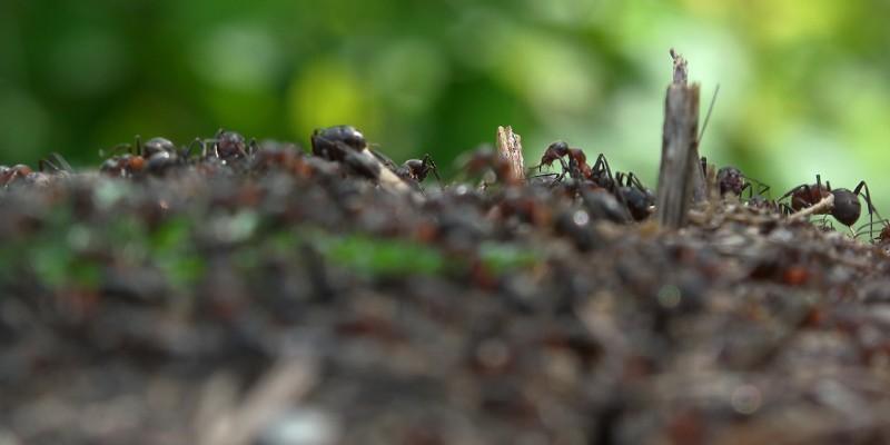 luoghi della casa covo di insetti